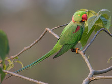 Green Parrot Perching On Branch