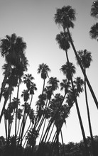 Palm Trees In A Sunny Day