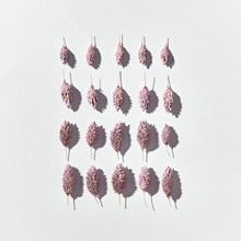 Creative Pattern Of Square Shape Of Dry Painted Cones With Shadows On A Light Background, Copy Space. Flat Lay.