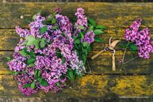 Picking Lilac