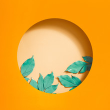 Circle Frame From Branches On ...