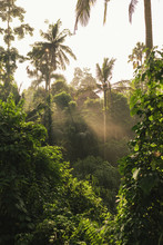 Tropical Plants In Misty Jungle