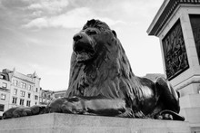 Lion Statue At Trafalgar Square