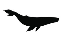 Vector Black Blue Whale Silhouette Isolated On White Background