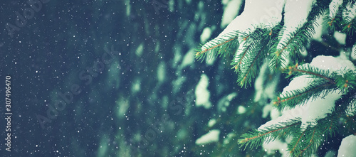 Fototapeta Winter Holiday Evergreen Tree Pine Branches Covered With Snow and Falling Snowflakes, Christmas Background, Horizontal obraz na płótnie