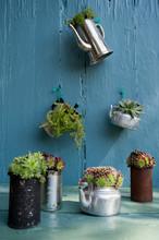 Various Succulent Plants On Ta...
