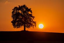 Silhouette Oak Tree On Land Ag...