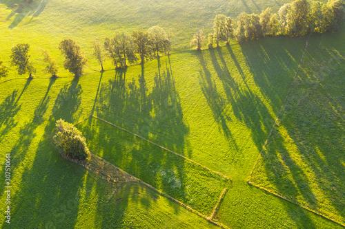 Aerial view of trees with long shadows on meadow at Wackersberg, Isarwinkel, Upper Bavaria, Bavaria, Germany - 307510661