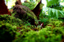 Close-up Of Moss Growing On Rock In Forest, Frankfurt