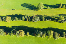 View Of Natural Monument Hedge...