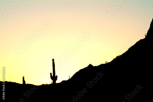 Fototapety, obrazy: Saguaro Cactus & desert silhouette