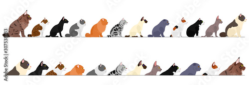 Fototapeta set of  side view cats border obraz