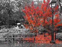 Colorful Red Leaves Cover The ...