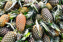 Fresh Pineapples From Farm - T...