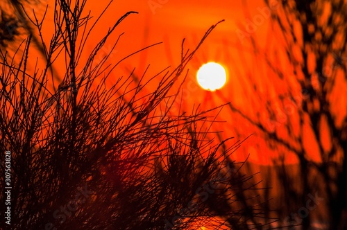 Beautiful view of the sunset in the red sky over the plants on a hill