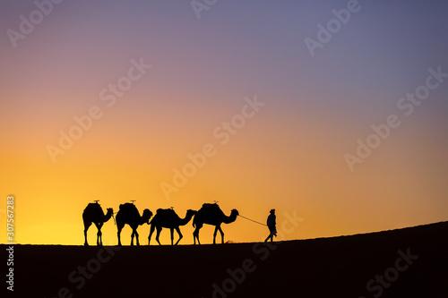 Silhouette of a camel caravan at sunrise in desert Sahara  Morocco