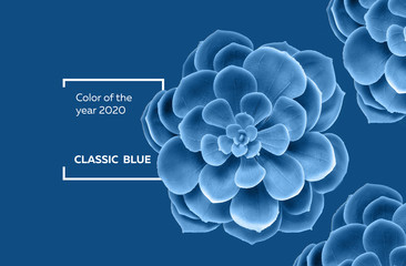 Succulent plant in color classic blue 2020 pantone color of the year