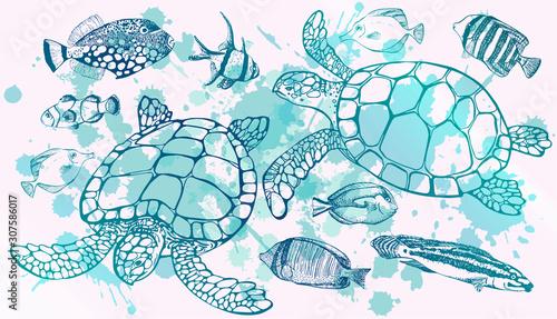 Fotografía Sea turtle and tropical fish