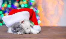 White Siberian Husky Puppy Wearing A Red Santa Hat Hugs Sleepy Baby Kitten On A Background Of The Christmas Tree. Empty Space For Text
