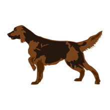 Golden Retriever Dog Vector Gr...