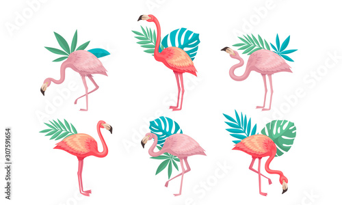 Keuken foto achterwand Flamingo Beautiful Pink Flamingos Set, Tropical Exotic Birds with Palm Leaves Vector Illustration