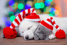 White Siberian Husky And Baby Kitten Wearing A Funny Caps Sleep On A Background Of The Christmas Tree