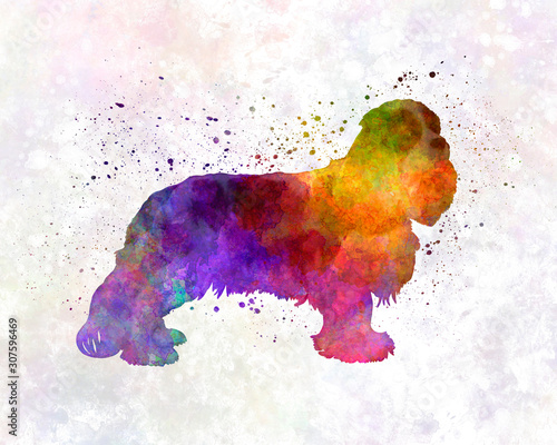Photo Cavalier King Charles Spaniel in watercolor