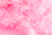 Beautiful Abstract Colorful White And Pink Feathers On White Background And Soft White Red Feather Texture On Pink Pattern, Pink Background, Valentine's Day Theme