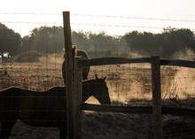 Horse, Animal, Farm, Nature, G...