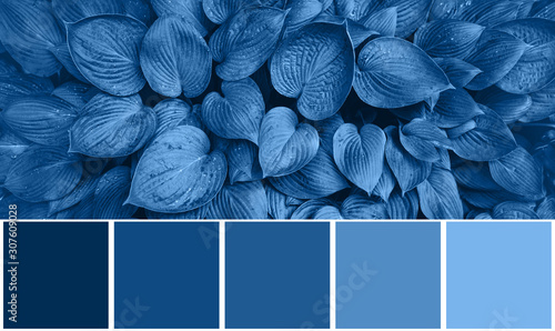 Fotografia Color palette with nature textures, leaves inspired by trendy blue color of the year 2020