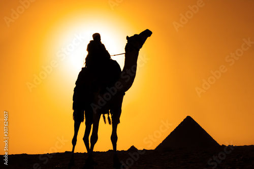 camel bedouin silhouette at giza pyramids cairo egypt at sunset Canvas Print