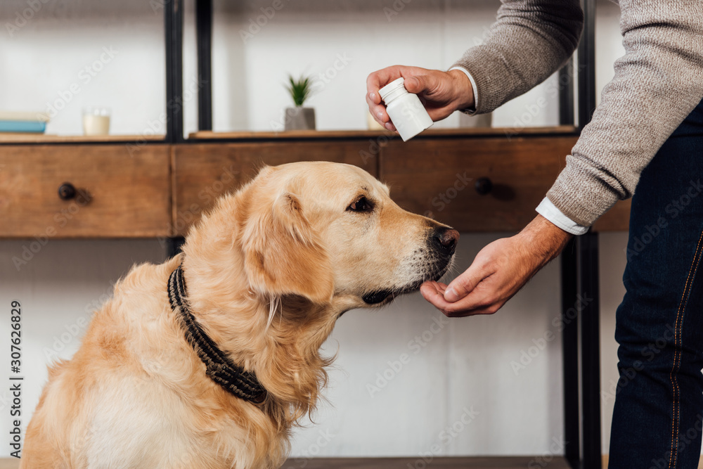 Fototapeta Cropped view of man giving vitamins to golden retriever at home
