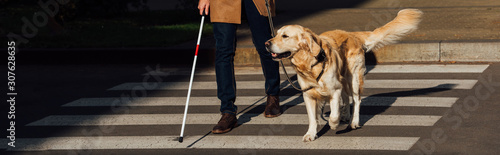 Fotografiet  Cropped view of blind man with guide dog walking on crosswalk, panoramic shot