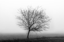 Black And White Scenery In The Fog