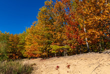 Colorful Leaves At Autumn In The Forest On Sandy Hill