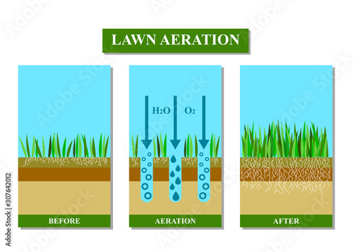 Fotografering Lawn aeration before and after, vector illustration.