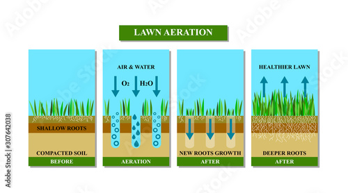 Lawn aeration before and after, vector illustration. Fototapet