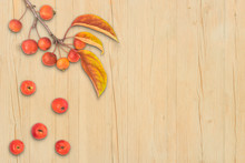 Autumn Composition Leaves Frui...