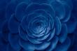 Succulent plant in trendy blue color.
