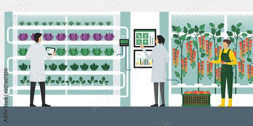 Fototapeta Vertical farming hydroponics obraz