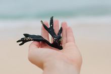 Hand With Seaweed