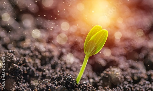 Small green plant growing from soil pile - 307676043