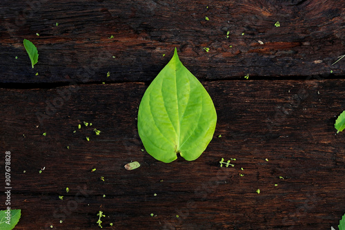 Colorful of the betel Piper (Piperaceae) on a brown wooden floor in the morning Canvas Print