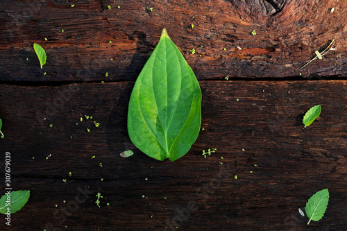 Photo Colorful of the betel Piper (Piperaceae) on a brown wooden floor in the morning