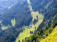 Beautiful Mountain Forest Land...