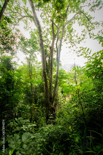 Trees in the Atlantic Rainforest, one of Brazil's largest and most endangered biomes Canvas Print