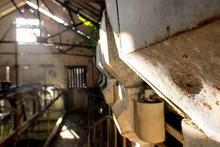 Shallow Focus On A Grain Hoppe...