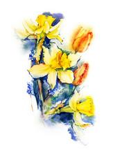 Daffodils And Tulips. Watercol...