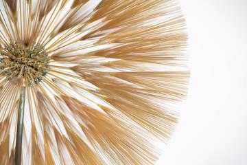 Fototapeta Dmuchawce abstract gold art