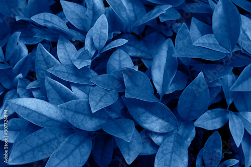 Fotomural  Trend color 2020 classic blue, top view, layout for design